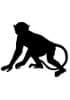 Monomères - Macaque Rhésus