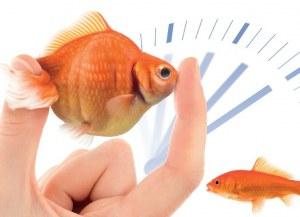 Nouvelle technologie FlexISH : protocole de FISH en 2 heures