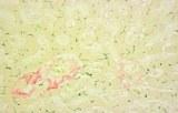 Colorations spéciales pour les pigments et les minéraux