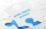 ADNg, ARN et protéines