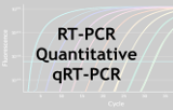RT-PCR quantitative - qRT-PCR