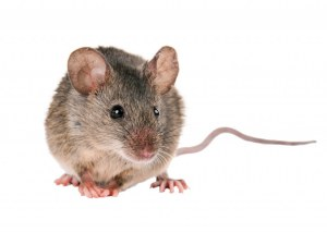 PureStain Mouse-on-Mouse Kits pour l'IHC